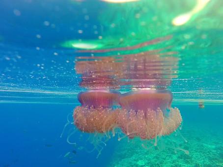 Les méduses sont apparues sur terre il y a environ 600 millions d'années