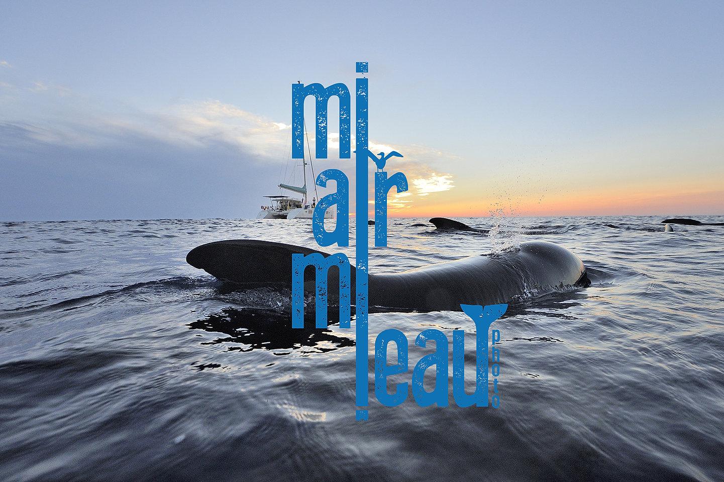Frederic Bassemayousse - Photographe - Mi Air Mi Eau Photo, Pilot whale, globicéphale, Méditerranée, Mediterranean sea, sun set, sailing boat, Lagoon 440