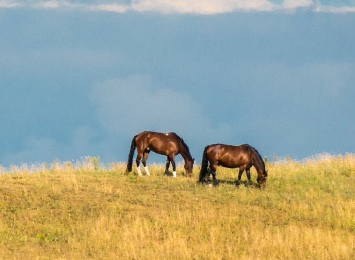Duo-Kommunikations- training (mit Pferd)