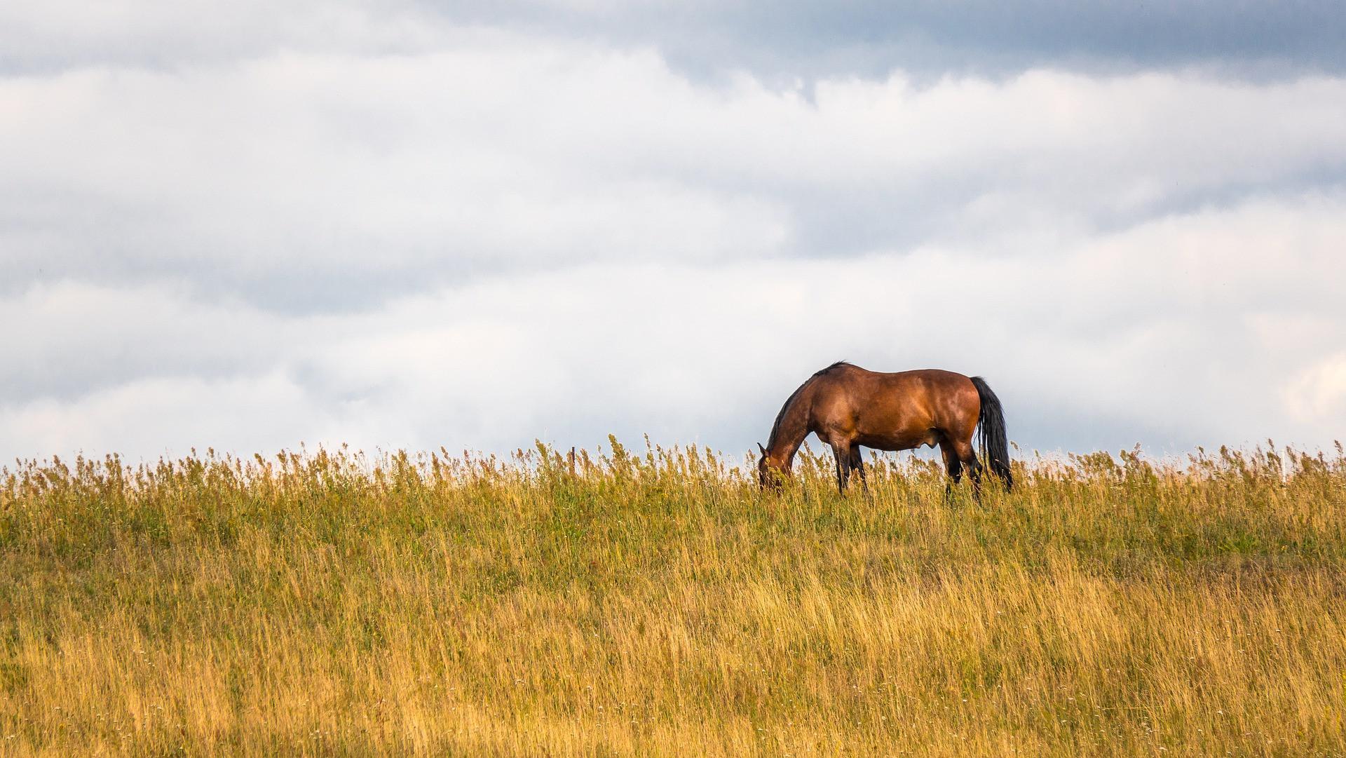 Kommunikationstraining (mit Pferd)