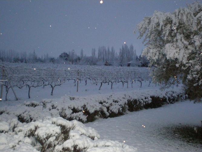 Vineyard and Terroir (7).jpg