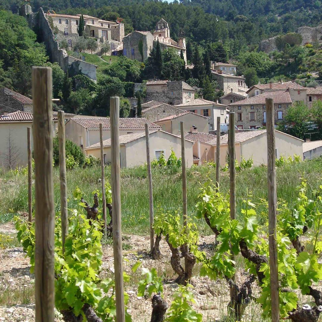 vineyards3-2.jpg