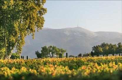 Ventoux Vineyards