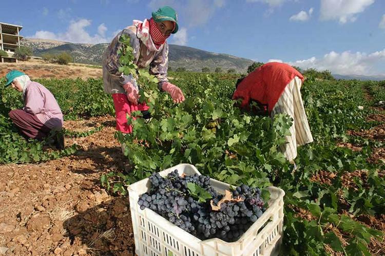 Vineyard and Terroir (10).jpg