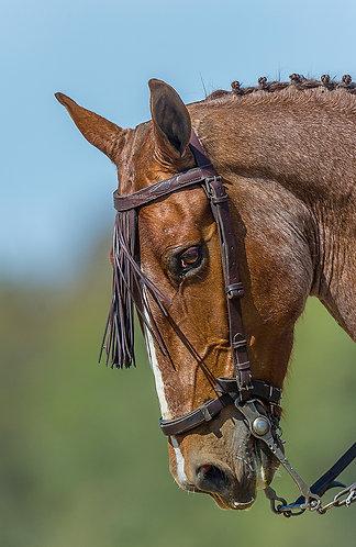Cara del caballo