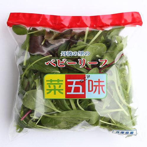 丹波の里のベビーリーフ菜五味 赤ライン ベビーリーフミックス 約50g×10袋