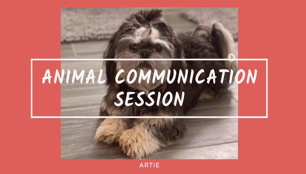 Animal Communication Session with Ellen