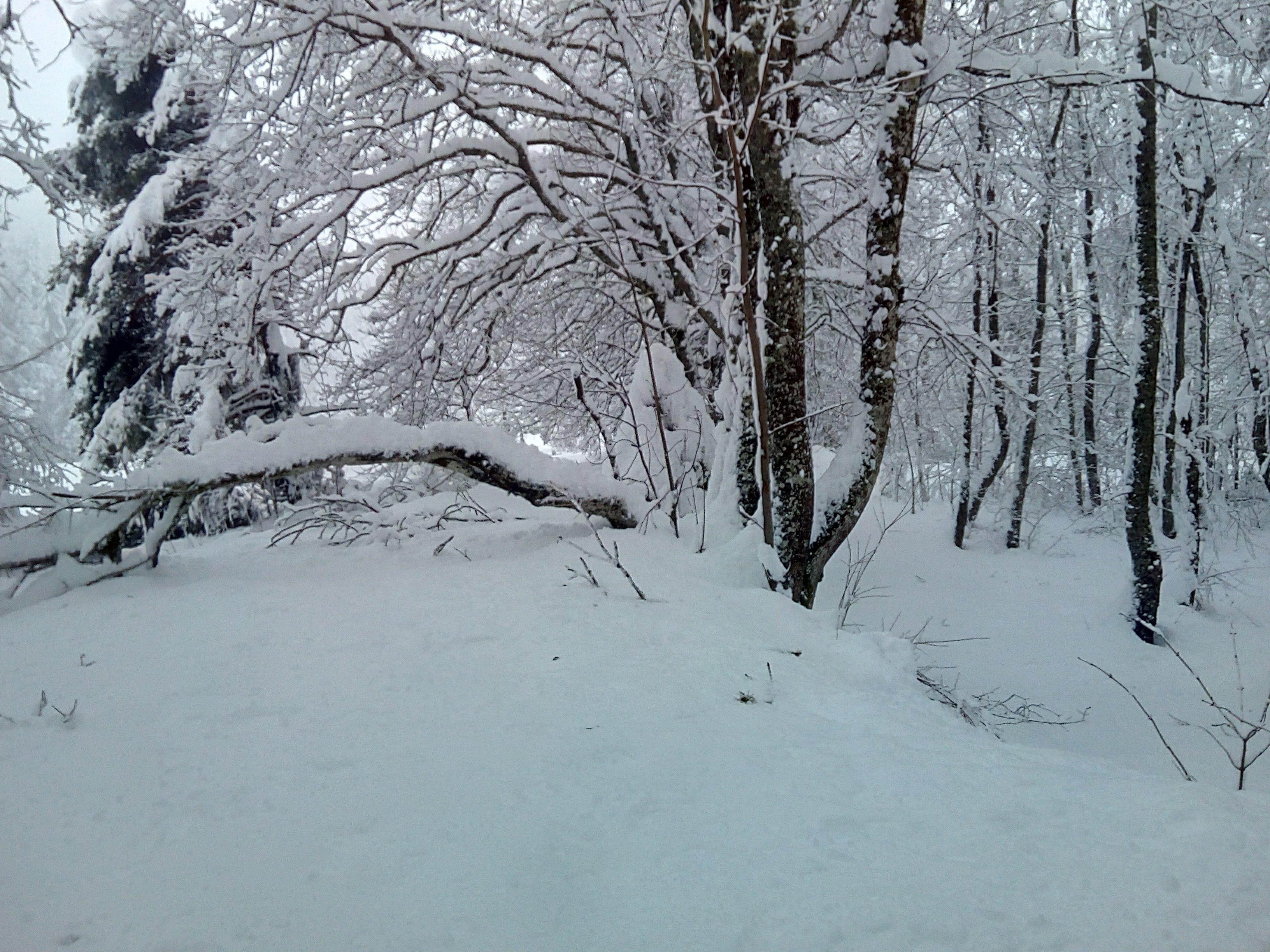 50 cm de neige !