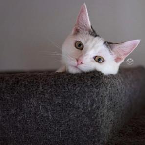 Catlovers Scratchers