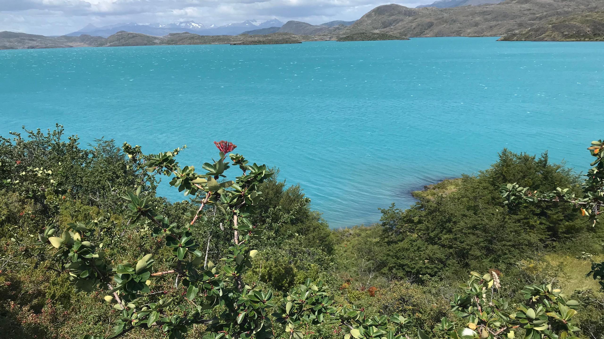 Auf dem Weg zum Torres del Paine waren überall solche kleinen Seen
