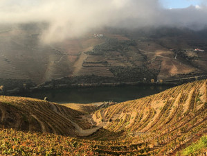 Under the Influence of the Douro