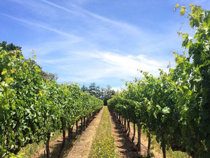 Ode to the winemakers