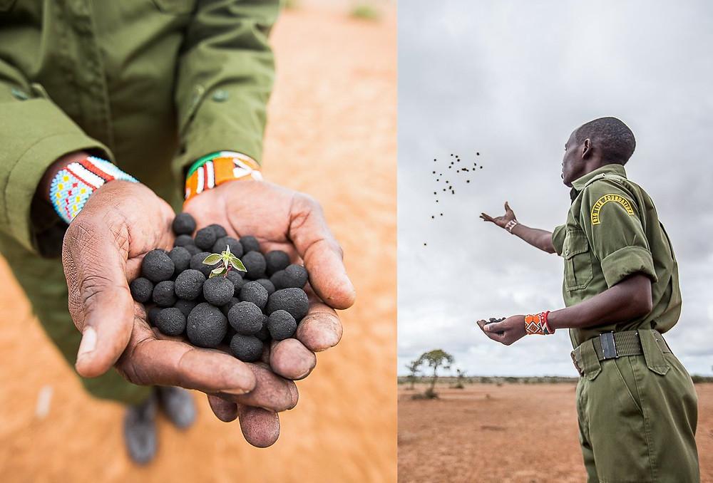 Seedballs Kenya