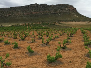 Dealing with the drought in the Cape Winelands