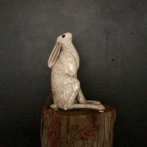 Moon Gazer Hare