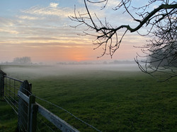 Misty evening over the fields