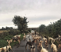 Photo of the Bedale Hunt hounds being exercised