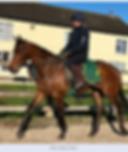 Photo of Helen Hinton on a horse