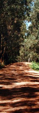 Estradas que levavam aos assentamentos