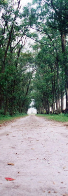 Assentamento Abelardo Luz/SC