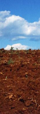 Plantio - assentamento Calmon/SC