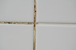 Grout Mold