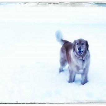 Gorgeous Mia (neighbor's dog)