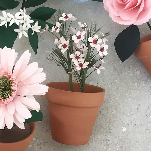 Potted Wax Flower