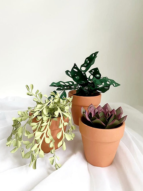 Plant Lover's Collection