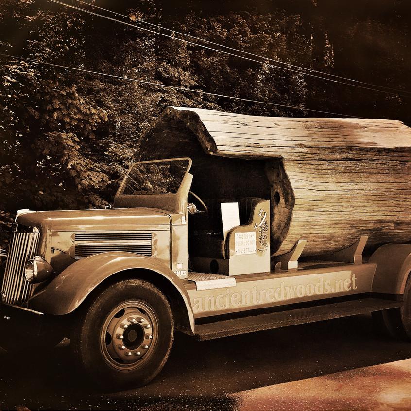 Litteral TRUNK car