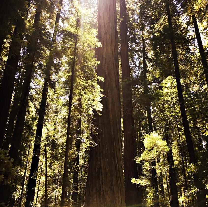 Founders' Tree