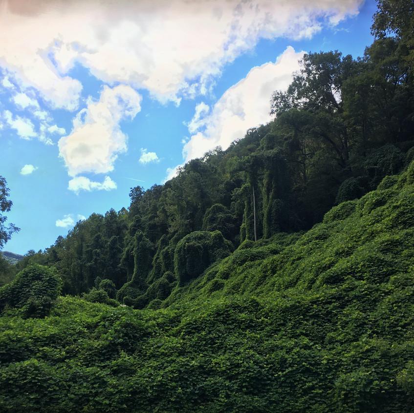 Mind-blowing vegetation.