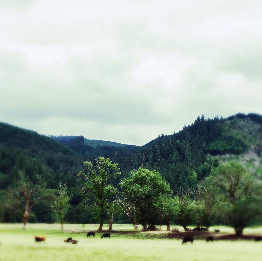 Oregon pastures