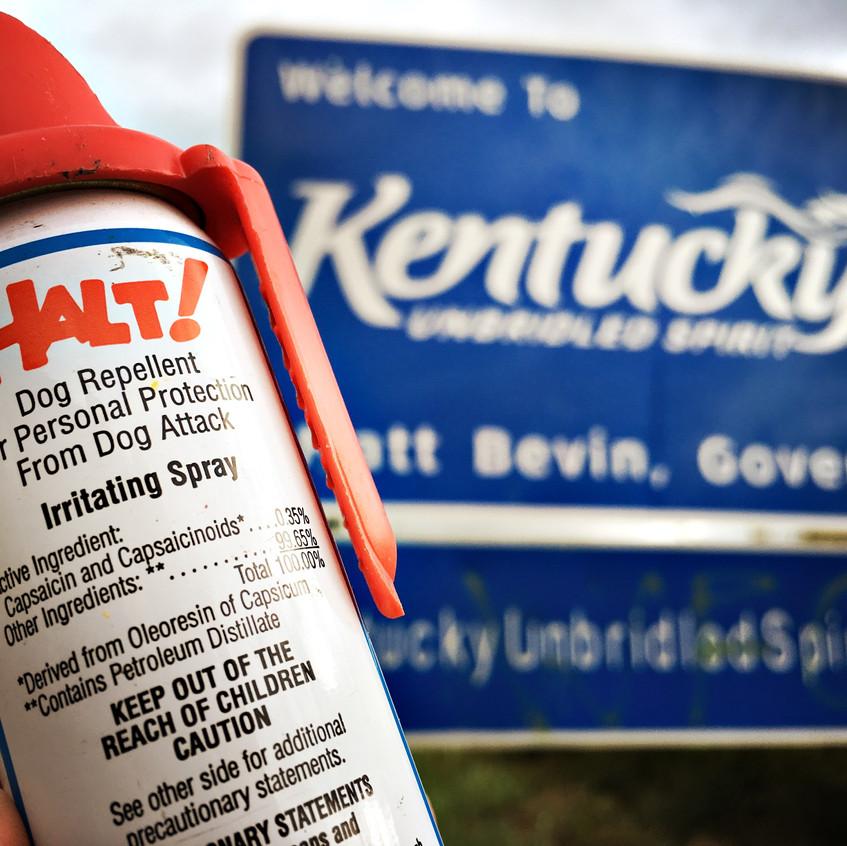 Kentucky dogs: I'm ready!