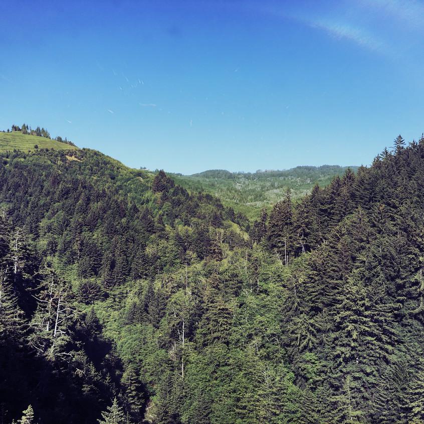 Oregon forests.