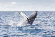 humpback-whale-1209297-1920_orig.jpg