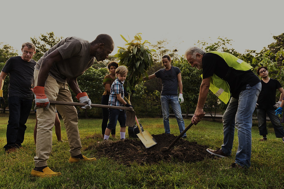 Diverse group of people are planting trees