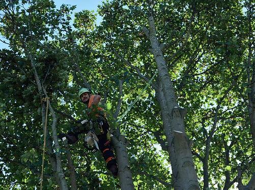 Tree climbin and aerial tree work