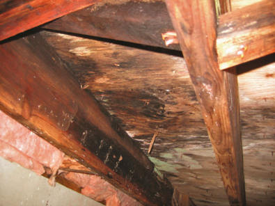 Rot and why it matters about Roof Repair / Roof Replacement
