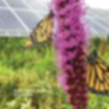 Polinators - Cover2.jpg
