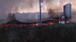 Un incendie détruit une porcherie à