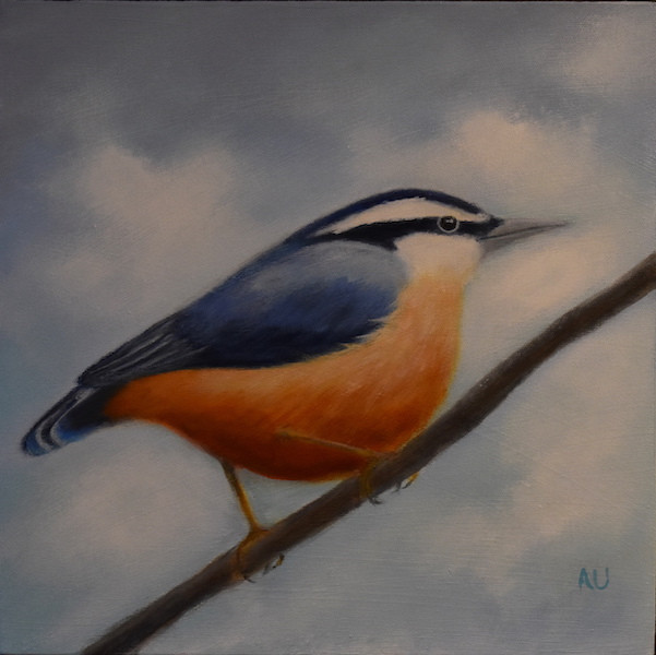"Red-Breasted Nuthatch 12 x 12"" - sold"