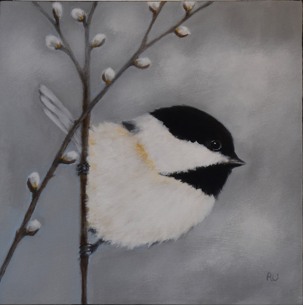 """Chickadee with Pussy Willows 12"""" x 12"""" - sold"""