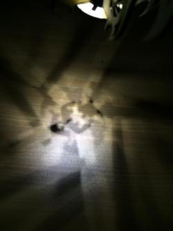 Laser cut prototype light shadow