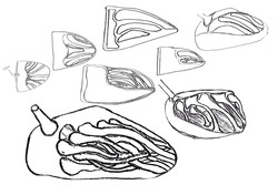 Sketches exploring tentacle features