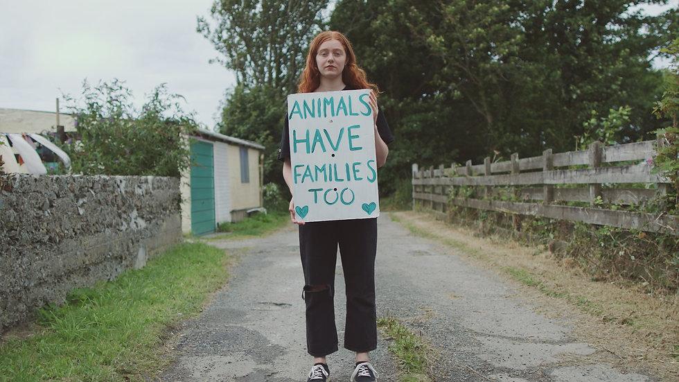 Evie banner.jpg