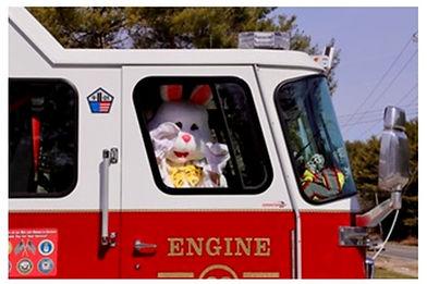 Cute bunny in truck.jpg