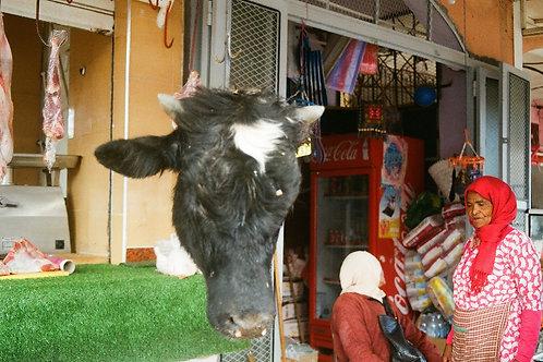 Biber Bull sacfrise - 10/18