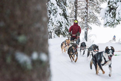 dog mushing brochure.jpg
