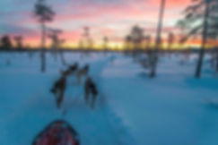 Running dogs in the last light of day.jp